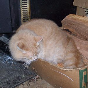 No box, to big or small Or to full for the Fat Cat