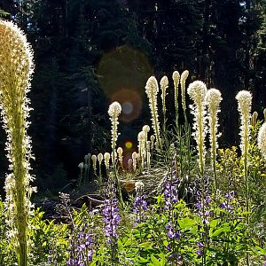 I love bear grass