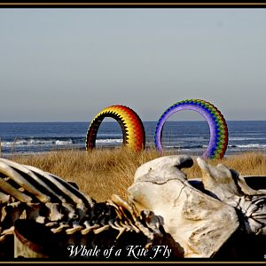 Whale of a Kite Fly