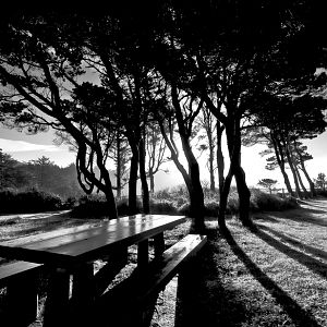 Bench in the Shadows