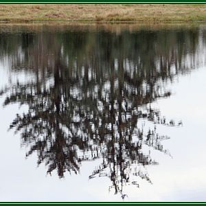 Playing with Pond Reflection