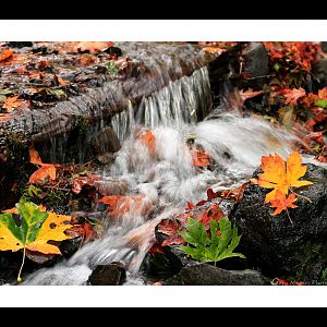 Fall at Wahkeena Creek